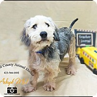 Adopt A Pet :: Dog - La Follette, TN
