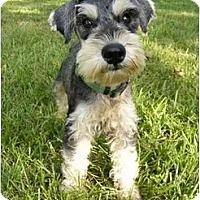 Adopt A Pet :: Spanky - Mocksville, NC
