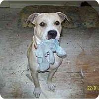 Adopt A Pet :: Monty - Kingwood, TX
