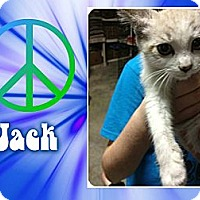 Adopt A Pet :: Jack - Washington, DC