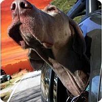Adopt A Pet :: Lola - Eustis, FL