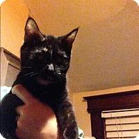 Adopt A Pet :: Layla - East McKeesport, PA