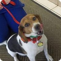 Adopt A Pet :: Lucky Buck - Dumfries, VA