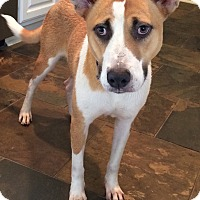 Adopt A Pet :: Jeanine - Fort Collins, CO
