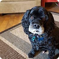 Adopt A Pet :: Spanky - Ogden, UT