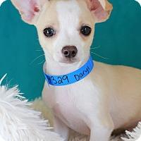 Adopt A Pet :: Daryl - Waldorf, MD