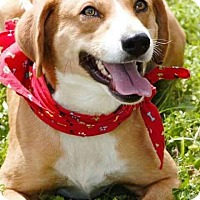 Adopt A Pet :: Asher in CT - Manchester, CT