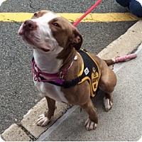 Adopt A Pet :: Cali - Rockaway, NJ