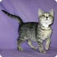 Adopt A Pet :: Elly - Powell, OH