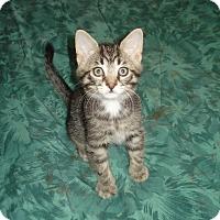 Adopt A Pet :: Jamie - Woodstock, ON