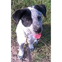 Adopt A Pet :: Snoopy - Austin, TX