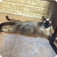 Adopt A Pet :: PRINCESS - Cypress, TX