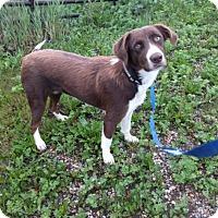 Adopt A Pet :: Ginger - Saskatoon, SK