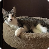 Adopt A Pet :: Princess - Loveland, CO