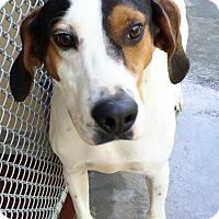 Adopt A Pet :: Jake - Hot Springs, VA