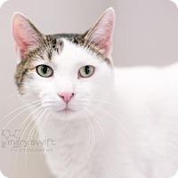 Adopt A Pet :: Moe Moe - Reisterstown, MD