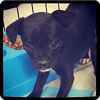 Adopt A Pet :: Farrah - Grand Bay, AL