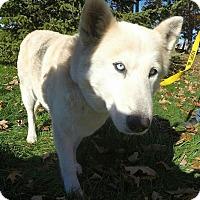 Adopt A Pet :: Maggie 2 - Detroit, MI