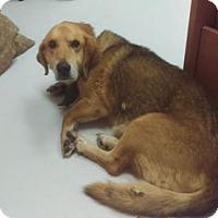 Adopt A Pet :: Grady - Mt. Gilead, OH