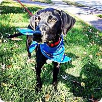 Adopt A Pet :: Rudy - Eden Prairie, MN