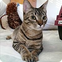 Adopt A Pet :: Louie - Modesto, CA