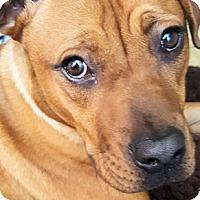 Adopt A Pet :: Max - Petersburg, VA