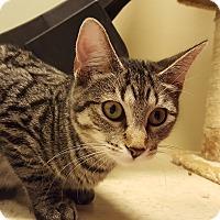 Adopt A Pet :: Aye Aye - Grayslake, IL