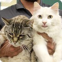 Adopt A Pet :: Carmella & Snowy - Elyria, OH