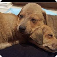 Adopt A Pet :: Breezy - Mesquite, TX