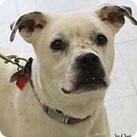Adopt A Pet :: Daizy Mae - Yukon, OK