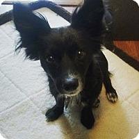 Adopt A Pet :: Ernie - Rancho Santa Fe, CA