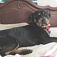 Adopt A Pet :: Stryker - Ormond Beach, FL