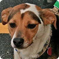 Adopt A Pet :: Lenny - Hastings, NY