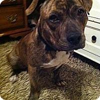 Adopt A Pet :: Lincoln - Owasso, OK