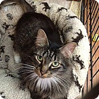 Adopt A Pet :: Hungry Howie - Byron Center, MI