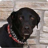 Adopt A Pet :: Miss Daisy - Newcastle, OK