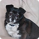 Adopt A Pet :: Martha