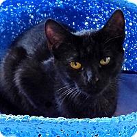Adopt A Pet :: Marsala - Victor, NY