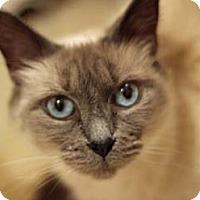 Adopt A Pet :: Tike - Merrifield, VA