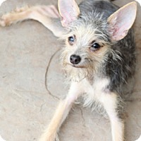 Adopt A Pet :: Texas - Norwalk, CT
