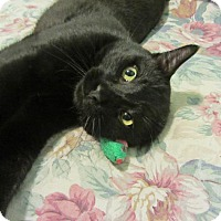 Adopt A Pet :: Steve - Norwich, NY