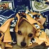 Adopt A Pet :: Sidney - Elkhart, IN