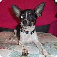 Adopt A Pet :: PEANUT - Medford, WI