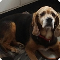 Adopt A Pet :: JUPITER - Albany, NY