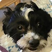 Adopt A Pet :: Beckett - McKinney, TX