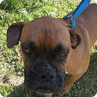 Adopt A Pet :: Zeva - Pembroke, GA