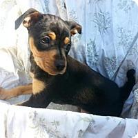 Adopt A Pet :: Florida - Austin, TX