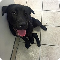 Adopt A Pet :: Layla - Cumming, GA