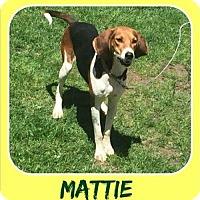 Adopt A Pet :: Mattie - Milton, GA