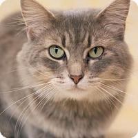 Adopt A Pet :: Aurora - Murphysboro, IL
